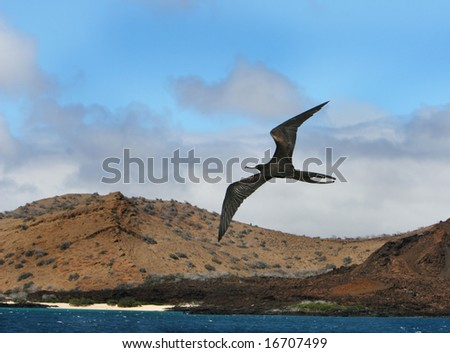A frigate bird soars high over the ocean with a beautiful beach in the background - stock photo