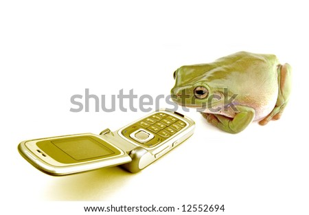 a frog answering a telephone on a white background - stock photo