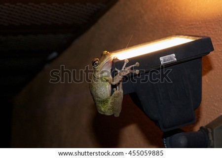 A frog is clinging onto an outdoor light at night and is looking at viewer in this humorous image. - stock photo