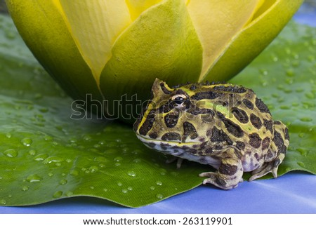 A frog on a lily pad with a yellow flower. - stock photo
