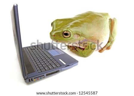 A frog on a white background looking at a computer - stock photo