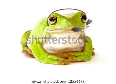 A frog with a headset to answer the phone on white