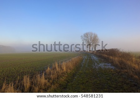 a frost covered footpath with an ash tree near arable crops in a yorkshire wolds landscape under a misty blue sky in winter