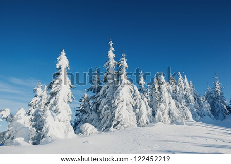 A frosty and sunny day is in mountains. Christmas scene - stock photo