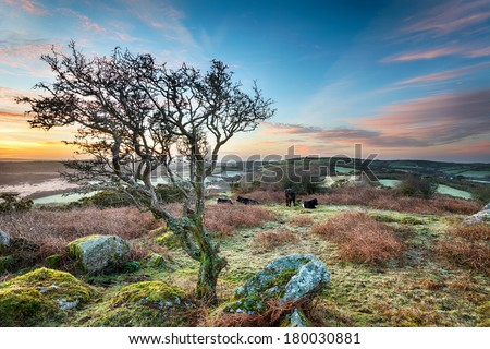 A frosty March sunrise at Helman Tor a craggy outcrop of rugged moorland near Bodmin in Cornwall, an HDR image - stock photo