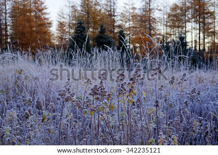 A frosty morning at the Edge of the forest. - stock photo