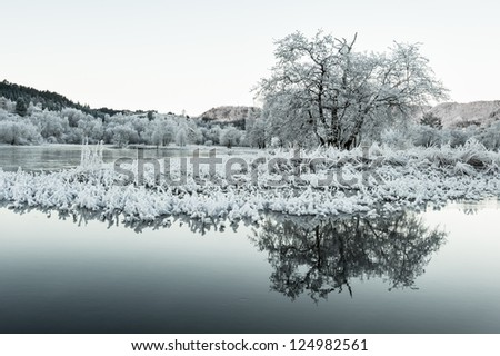A frosty tree by a lake in Norway - stock photo