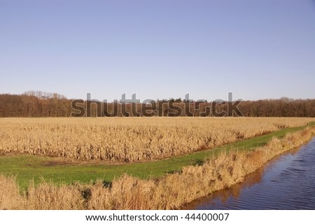 A frozen ditch and maize fields in winter - stock photo