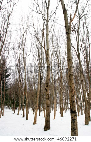 A Frozen Forrest Sighet Romania. - stock photo