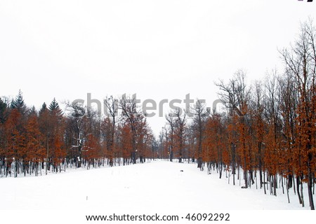 A Frozen Forrest Sighet Romania. - stock photo