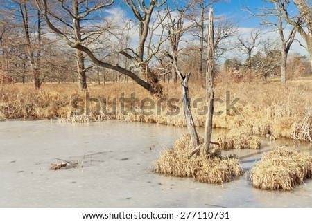 A frozen pond in the Deer Lake Natural Area wetland in St. Louis Forest Park on a sunny winter day with a few altocumulus clouds. - stock photo