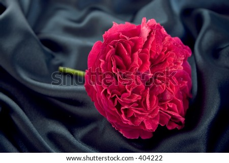A full blown red rose lying on blue satin - stock photo
