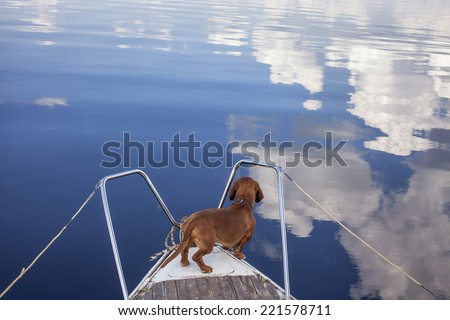 A funny Dog on a boat for a ride. Looking to the cloud`s reflection in the water - stock photo