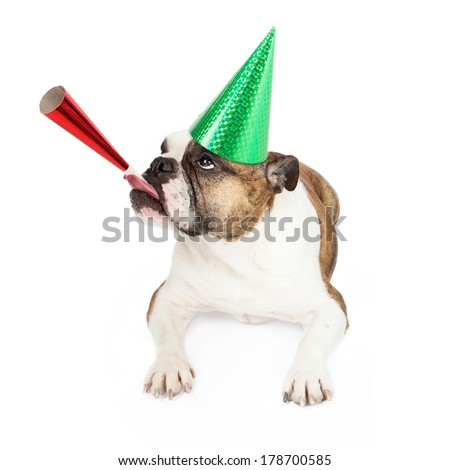 A funny image of a Bulldog looking to the side and while wearing a green party hat and blowing on a red party horn