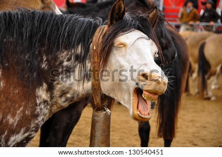A funny looking horse that appears to be laughing.