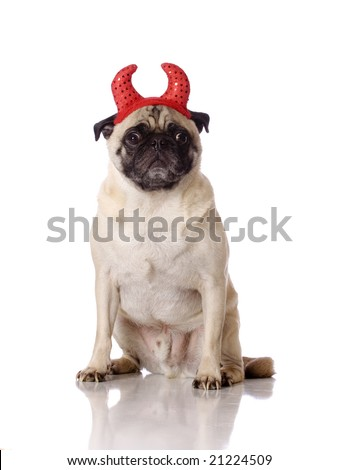 a funny looking pug dog sitting wearing devil horns