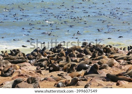 a fur seal colony at cape cross namibia - stock photo