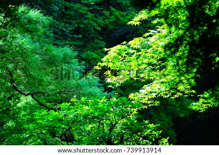 https://thumb7.shutterstock.com/display_pic_with_logo/167494286/739913914/stock-photo-a-garden-in-kyoto-739913914.jpg
