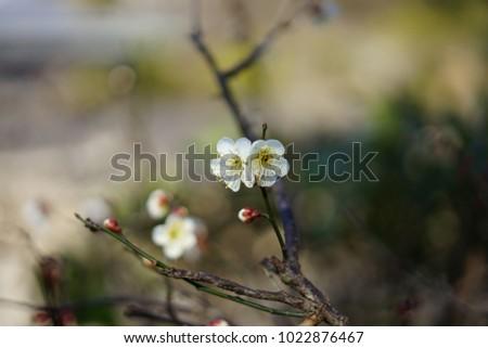 https://thumb7.shutterstock.com/display_pic_with_logo/167494286/1022876467/stock-photo-a-garden-in-shizuoka-1022876467.jpg