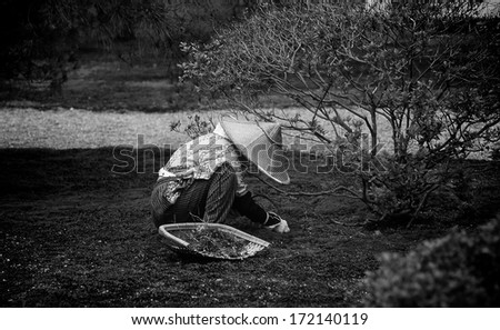 A gardner in a public garden in Kyoto, Japan exemplifies solitude and dedication to a craft. - stock photo