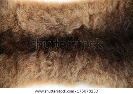 A Genuine New Zealand Possum Pelt AKA Skin or Hide. The population of Possum in New Zealand is approximately 60 million. They consume approximately 21 Tons of Vegetation Nightly, they are major pest. - stock photo
