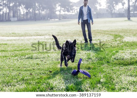 A German Shepherd dog playing with its owner on a frisk morning in the park. - stock photo