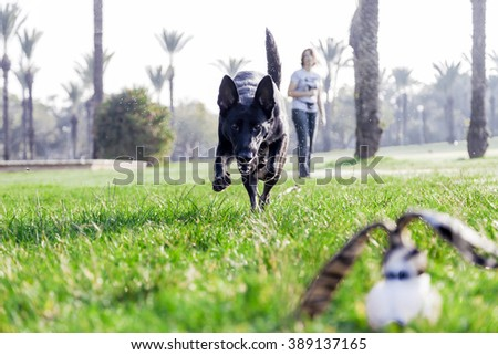 A German Shepherd dog playing with its owner on a frisk morning in the park.