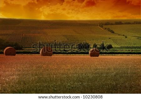 a german vineyard near the rhein river - stock photo