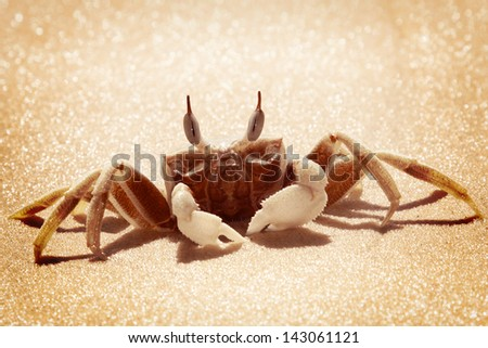 A Ghost crab - stock photo