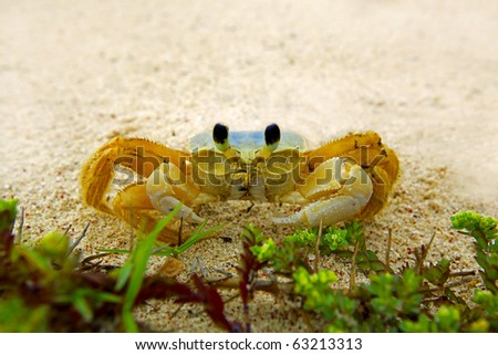 A ghost crab shot with a wideangel at a beach on Aruba