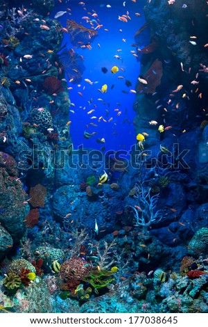 A giant fish tank filled with tropical fish. - stock photo