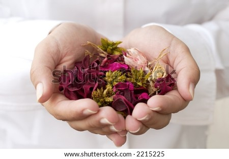 A Gift in a girl's hands - stock photo