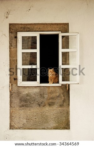 A ginger cat  in the window. - stock photo