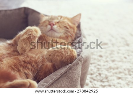A ginger cat sleeps in his soft cozy bed on a floor carpet, soft focus - stock photo