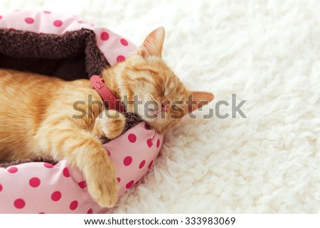 A ginger kitten sleeps in his soft cozy bed on a white carpet, soft focus - stock photo
