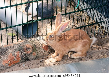A ginger rabbit in cage at a children's farm