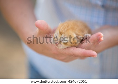 a girl holding a kitten Baby, newborn kitten, eyes closed, blind kitten, little ginger kitten - stock photo