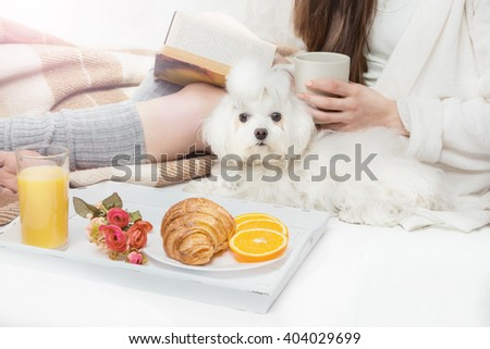 A girl reading a book. Breakfast in bed. affection a pet dog pup white maltese. Calm relaxed home mood