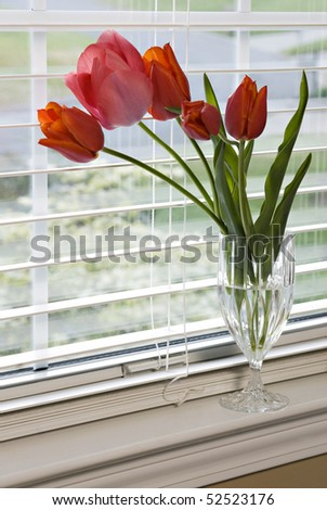 A glass filled with red tulips on a window sill, vertical with selective focus - stock photo