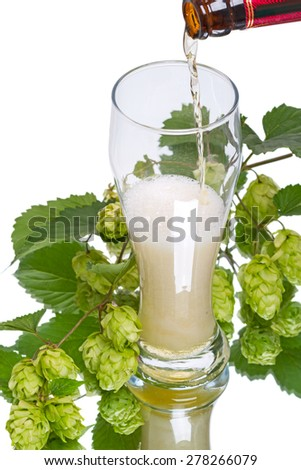 A glass of light beer and branch of hop isolated on white background - stock photo