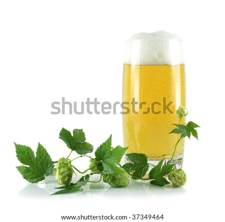 A glass with beer and a hop isolated on a white background - stock photo
