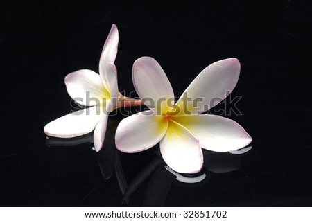 A glorious flower with water drops - stock photo