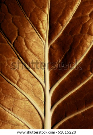 A golden leaf lit by the sun - stock photo