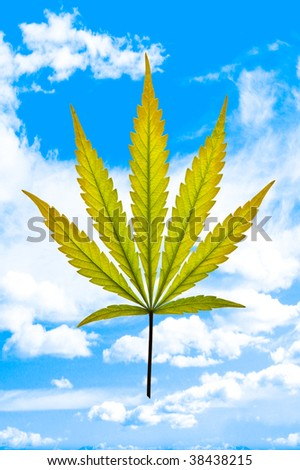 A golden marijuana leaf on a cloudy blue sky background - stock photo