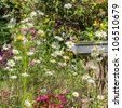A goldfinch admires the flowers in an English country garden! - stock photo