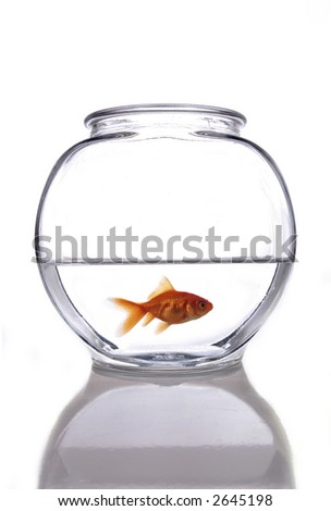A goldfish in a bowl against a white background. - stock photo