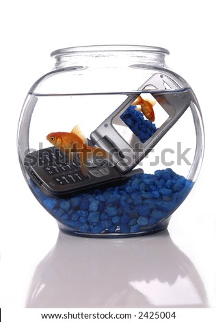 A goldfish in a bowl swims by a cell phone submerged in the water. A picture of the same goldfish is displayed on the screen of the cell phone. Orientation is vertical. - stock photo
