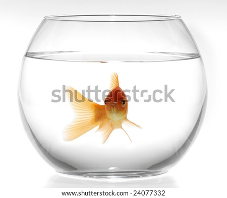 A goldfish in fishbowl on white background - stock photo