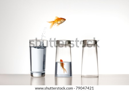 A Goldfish jumping over a couple of glasses - stock photo
