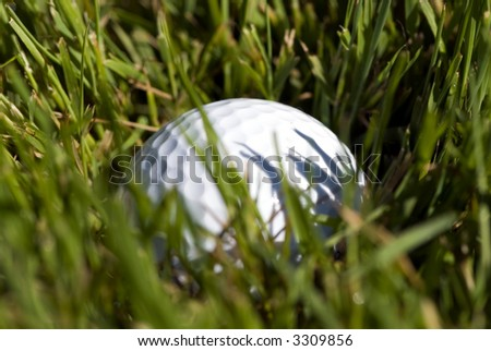 A golf ball hidden in the tall grass in the rough. - stock photo
